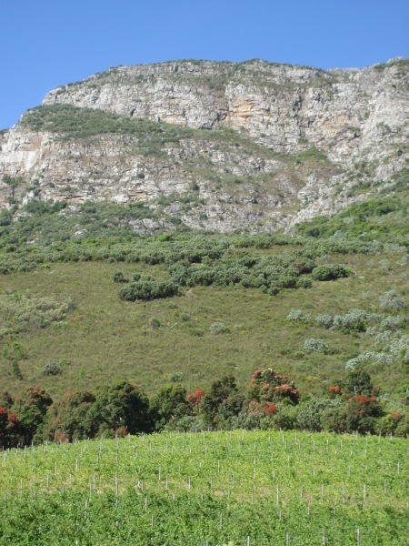 Vines, fynbos, rock and blue sky define Cape terroir