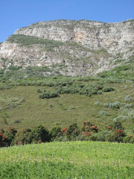Vines, fynbos, rock and blue sky define Cape terroir