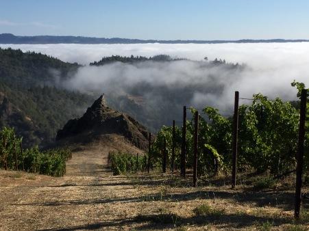Fog rolling in below Spring Mountain at Cain Vineyards