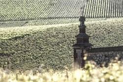Maison Bereche Champagne vineyard