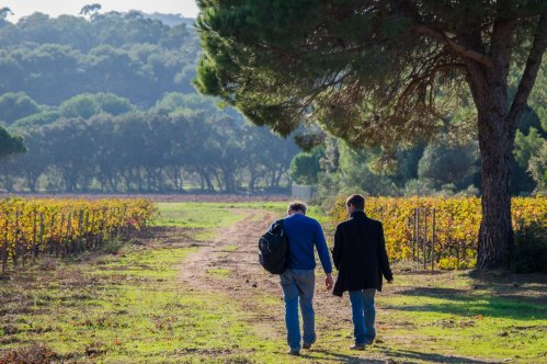 Bill strolling at La Courtade, Porquerolles