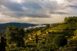 Morning in the Douro