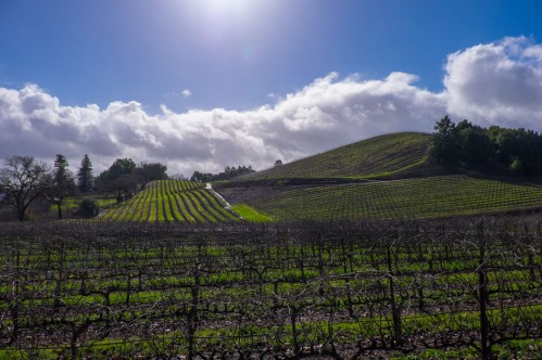 Russian River Valley Vineyards ©John Szabo, MS