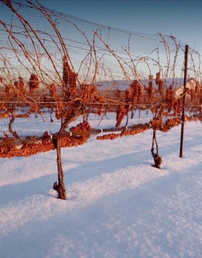 Icewine Wines of Ontario 2
