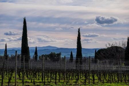 Vineyards at Pieve Santa Restituta, south of Montalcino-4209