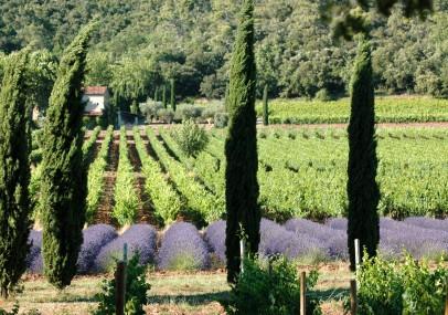 Côteaux Varois en Provence