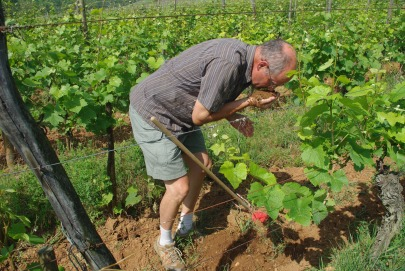 Maurice Barthelmé from Albert Mann revealing the _dirt_ about The Granc Cru Hengst