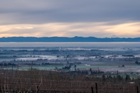Mount Hood from the Dundee Hills-8781