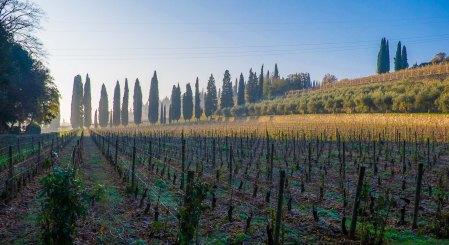 Misty autumn morning, Valpolicella-3697