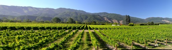 Whitehaven Vineyard