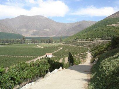 Errazuriz Vineyards