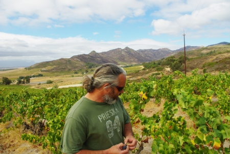 Swartland's Adi Badenhorst walking his old vines