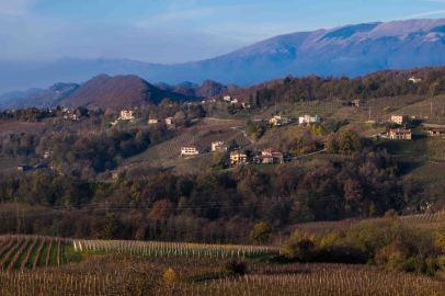 Vineyards, Conegliano-3743