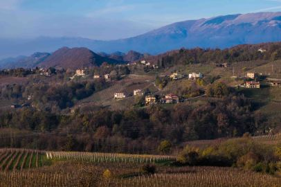 Vineyards, Conegliano-3743