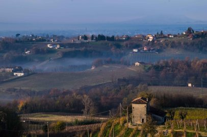 Vineyards, morning, Conegliano-3742
