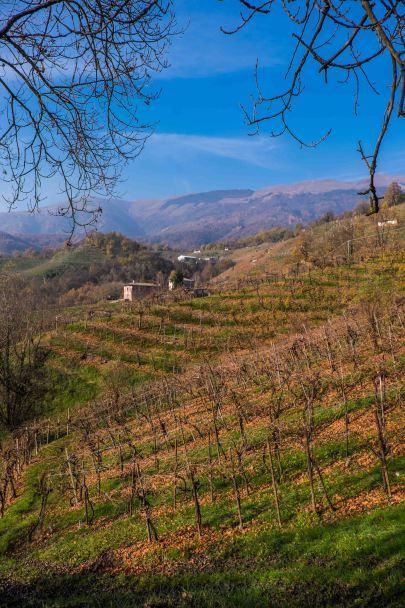 Vineyards, Valddobbiadene-3759