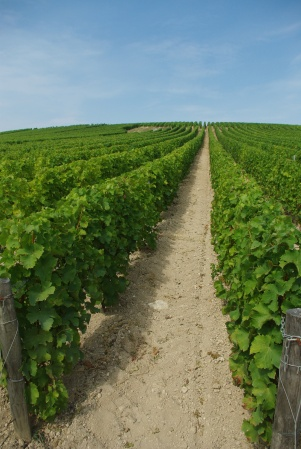 the-famous-caillottes-soil-of-sancerre