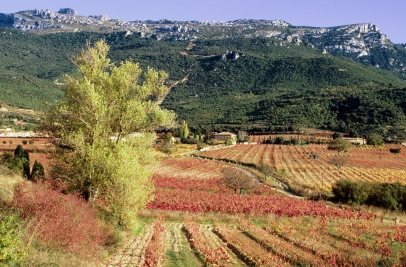 vineyards-and-tolon%cc%83o-mountain_remelluri-copia