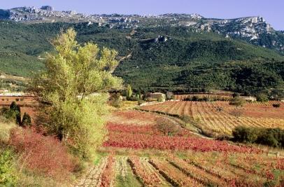 vineyards-and-tolon%cc%83o-mountain_remelluri-copia