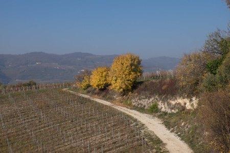 Exposed limestone, Corte Sant'Alda