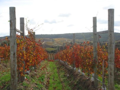 garzon-vineyards-autumn
