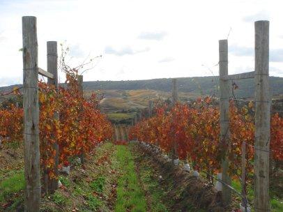 garzon-vineyards-autumn