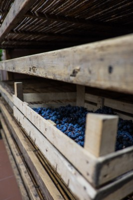 grapes-drying-for-amarone-novaia-3695