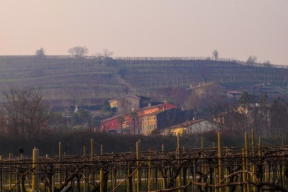 Marco Mosconi Vineyards