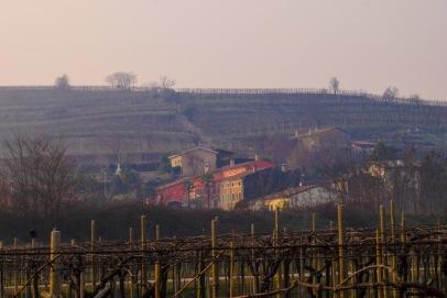 Marco Mosconi Vineyards