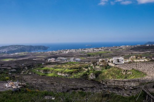 Vineyards, southern Santorini