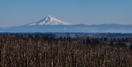 Mt. Hood from Cristom's Jessie Vineyard, Eola-Amity Hills