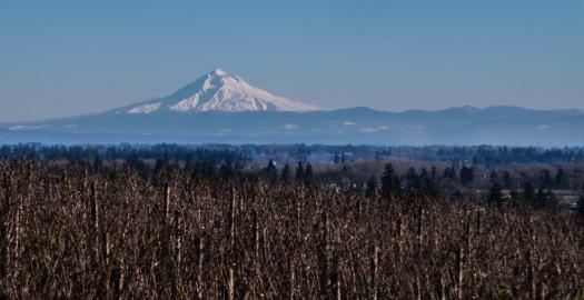 Mt. Hood from Cristom's Jessie Vineyard, Eola-Amity Hills