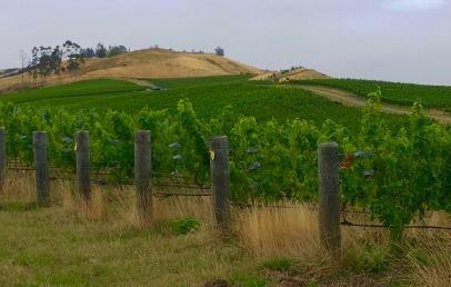 Le vignoble de Churton, dans Marlborough.