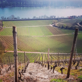 When you see one grand cru you've seen another grand cru #nierstein #rheinhessen #rhein