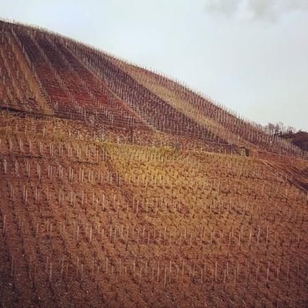 The desparate grade of Ahr Valley vineyards