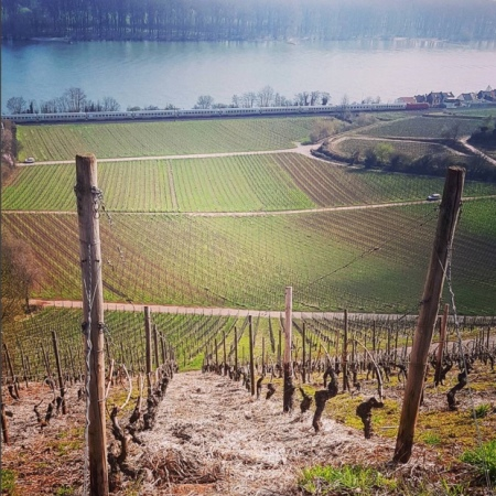 When you see one grand cru you've seen another grand cru #nierstein #rheinhessen #rhein #roterhang