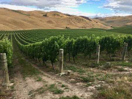 NZ Marlborough Arid - 1