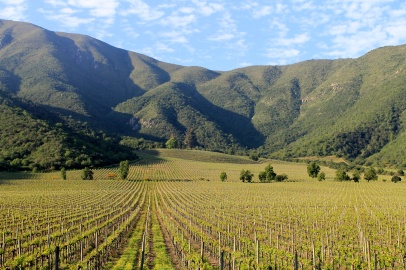 Dom Vineyard