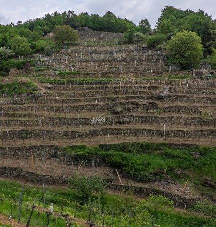 Achleiten Vineyard, Wachau