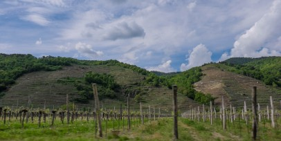 Flat vs. Terrassed Vineyards, Wachau