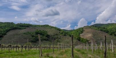 Flat vs. Terrassed Vineyards, Wachau