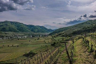 Looking West in the Danube Valley, from Kollmitz to the Kollmütz vineyards