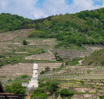 Terrassed vVineyards, Wachau-7806