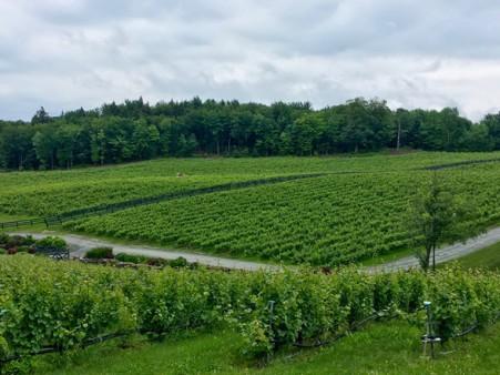Vignoble du Ruisseau, Dunham (@Nadia Fournier)