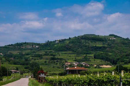Vineyards in Soave Classico-5199