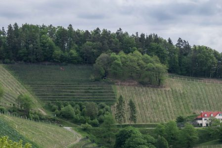 One of the very few terraced vineyards in Sudsteiermark