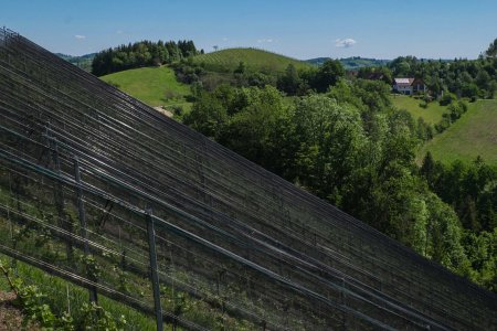 Possnitzberg, with hail nets