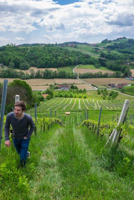 """Sattlerhof's """"Roller Coaster"""" Sernauberg vineyard"""