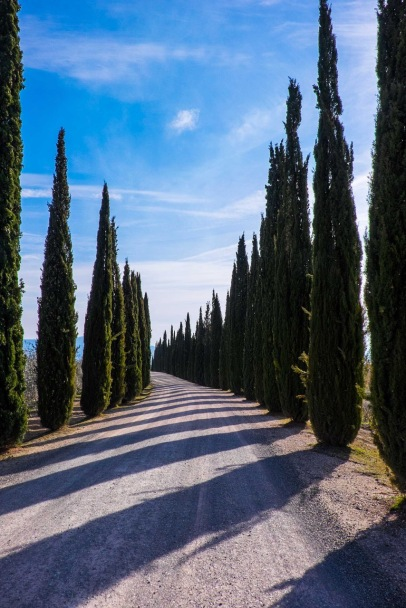 Cipress tree-lined Tuscan road-0079