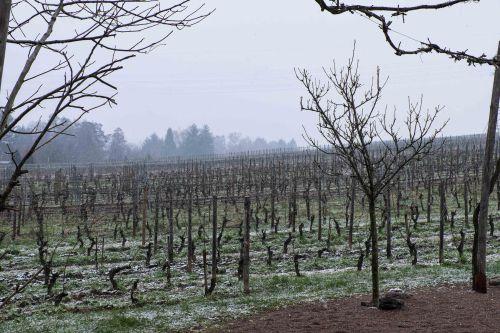Snow in the Kühn vineyards March 2018-0131